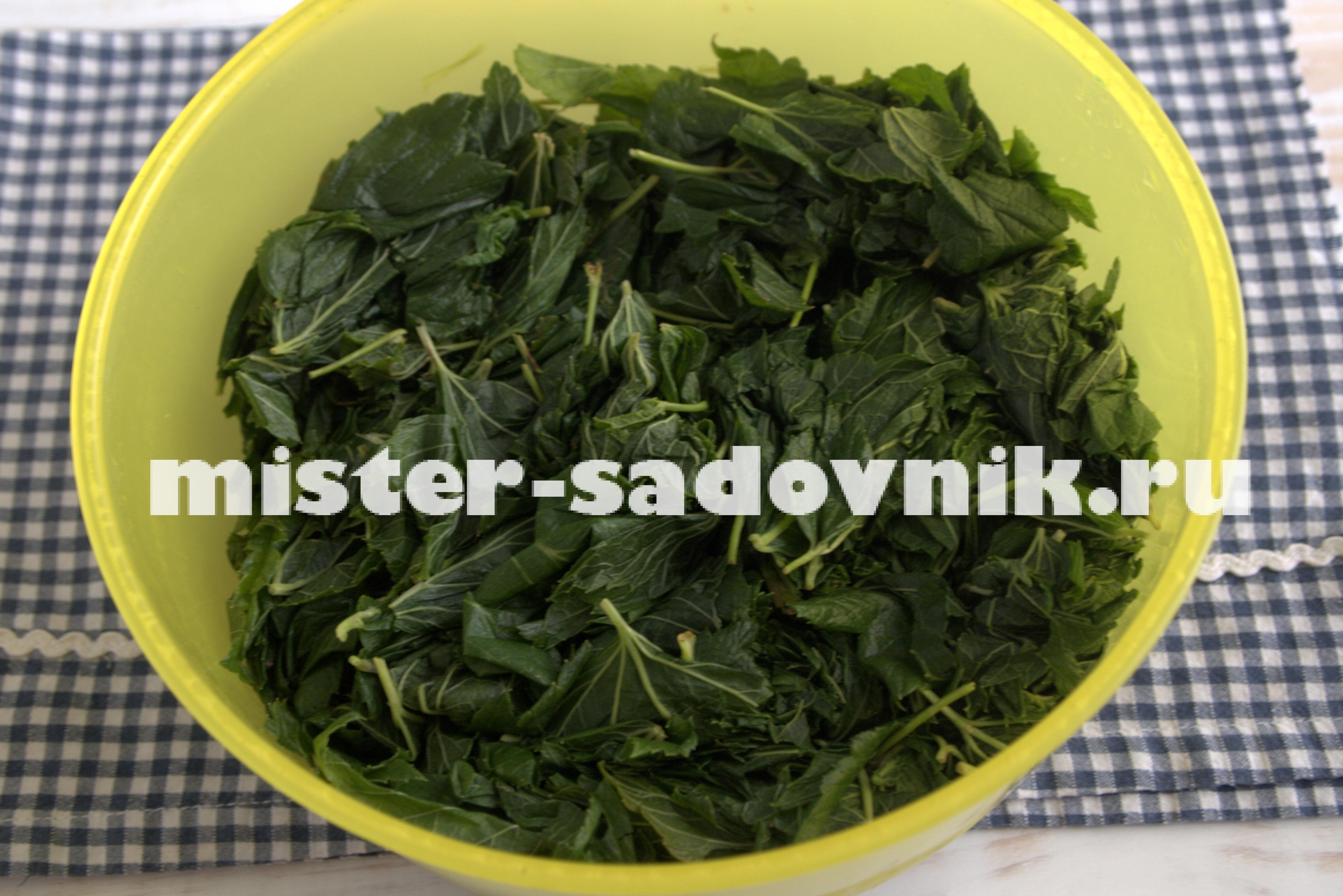 как ферментировать листья для чая