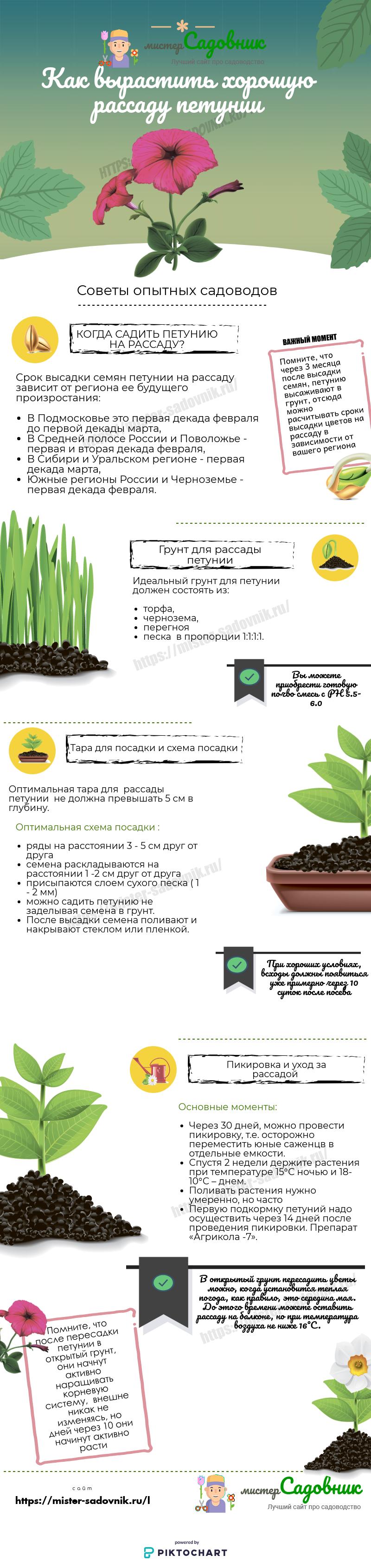 как вырастить рассаду петунии из семян
