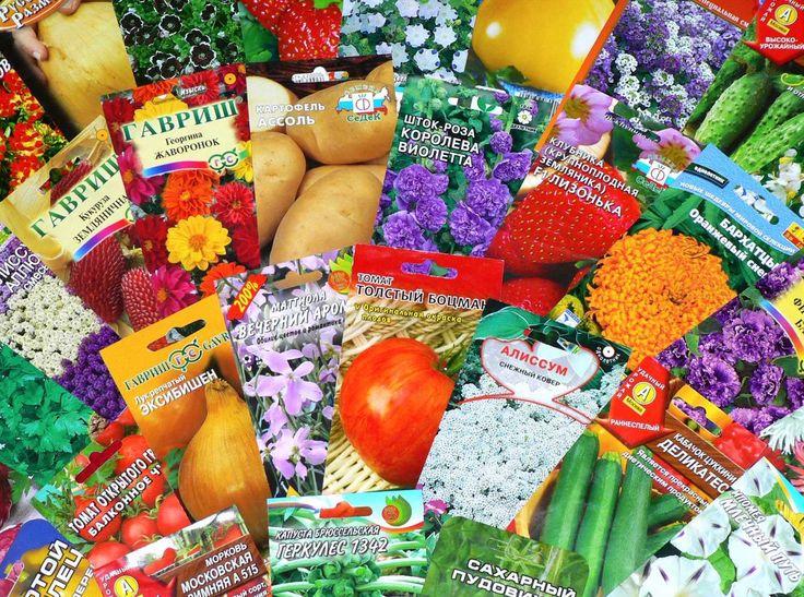 Как выбирать семена