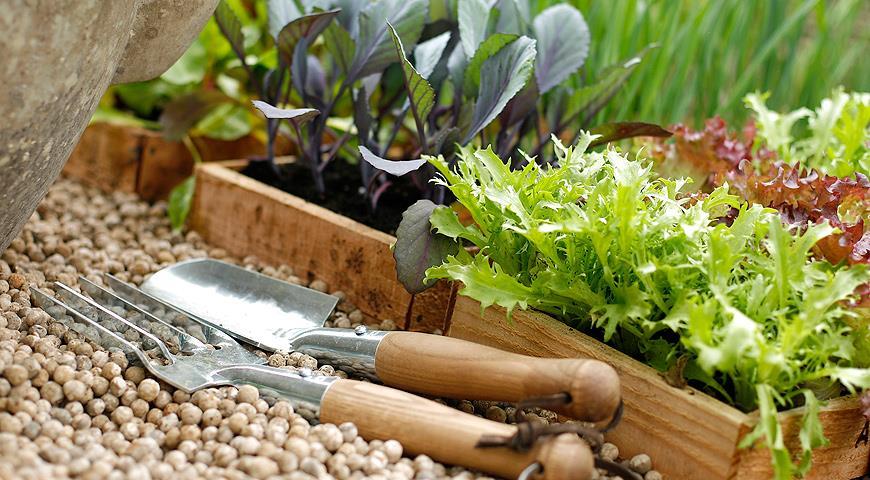 Сроки посева семян на рассаду и в грунт