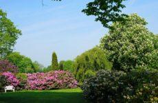 Как ухаживать за кустарниками