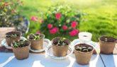 однолетние цветы на рассаду