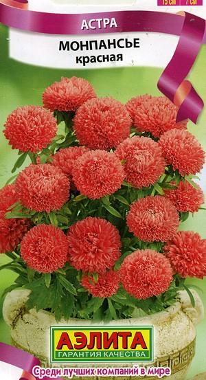 Астра бордюрная многолетняя низкорослая — Цветы365