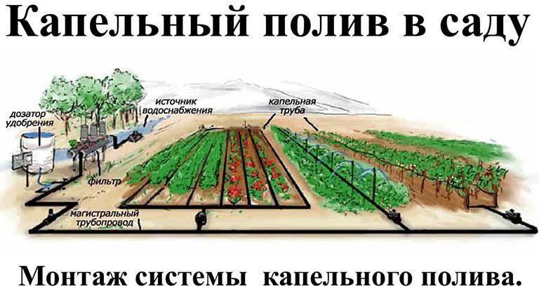 как поливать плодовые деревья