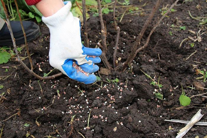 Когда удобрять плодовые деревья в саду
