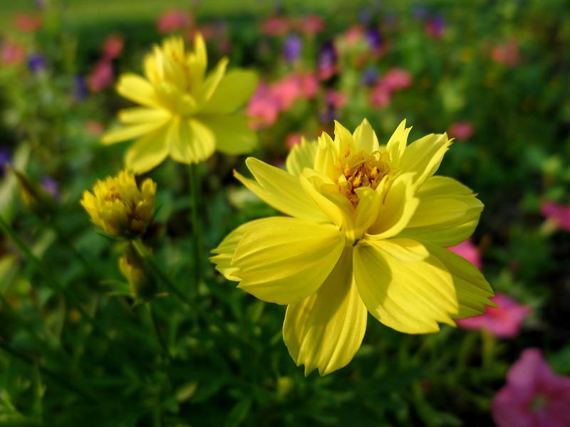 Серно -желтая