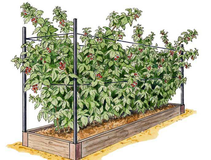Как пересадить малину на новое место осенью