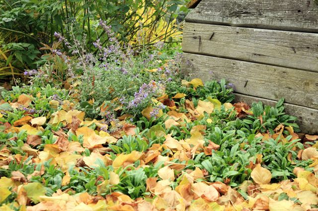 В этой статье поговорим о том, какие садовые работы в октябре необходимо провести на вашем дачном участке, чтобы в следующем году получить хороший урожай.