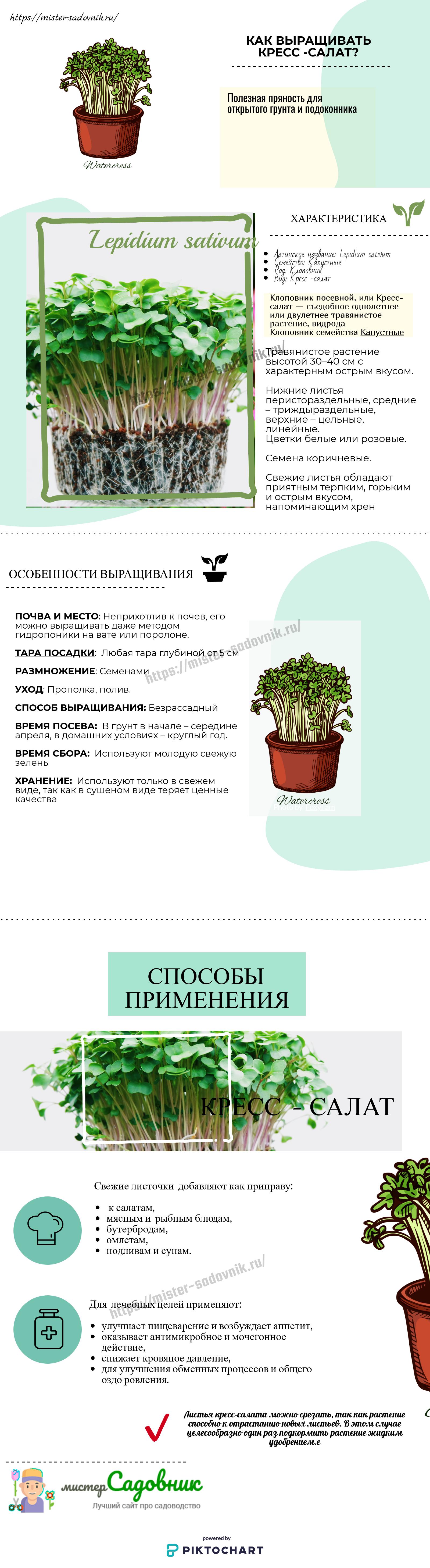 как выращивать кресс-салат