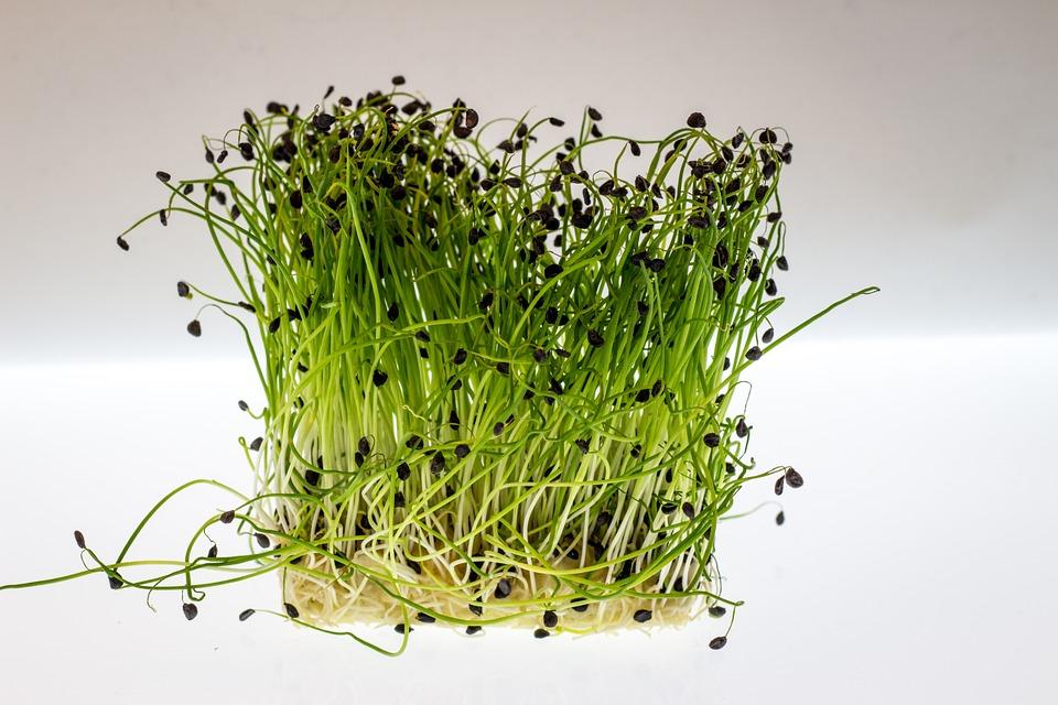 выращивать кресс-салат