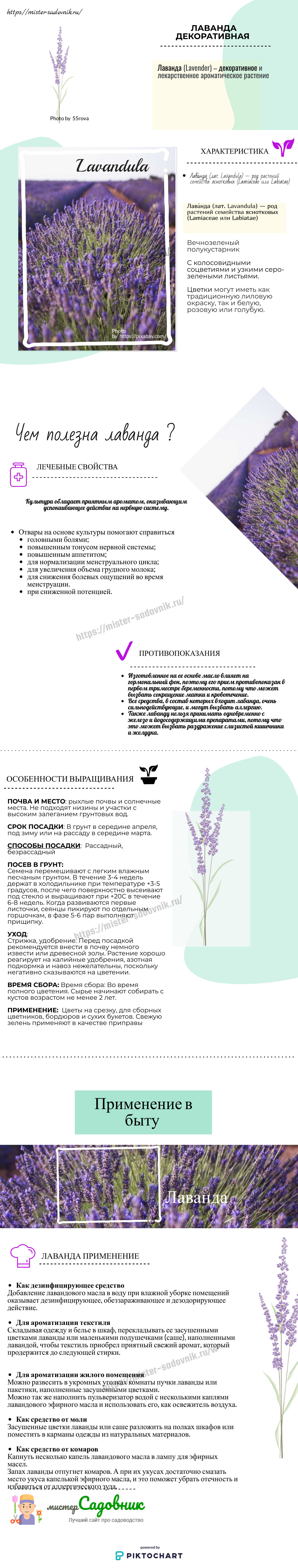 Как выращивать лаванду